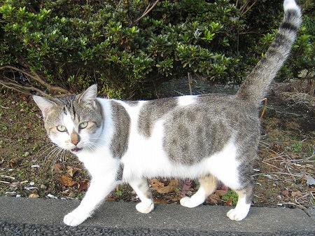cat_101014 (1).jpg