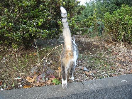 cat_101014 (10).jpg