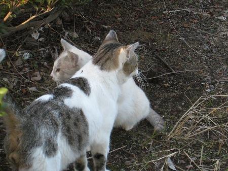 cat_101014 (11).jpg