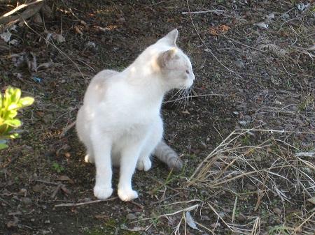 cat_101014 (12).jpg