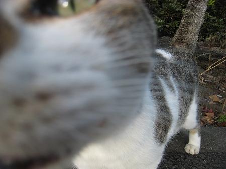 cat_101014 (3).jpg