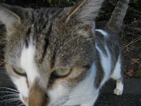 cat_101014 (4).jpg