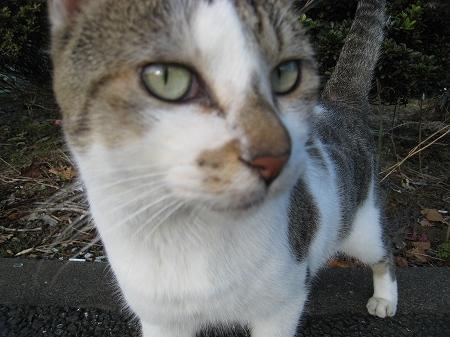 cat_101014 (5).jpg