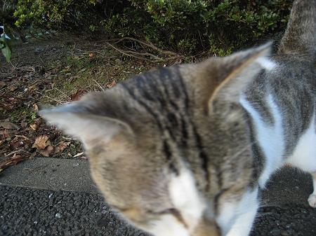 cat_101014 (8).jpg