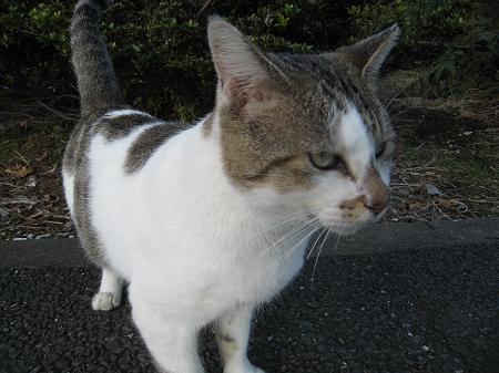 cat_101014 (9).jpg